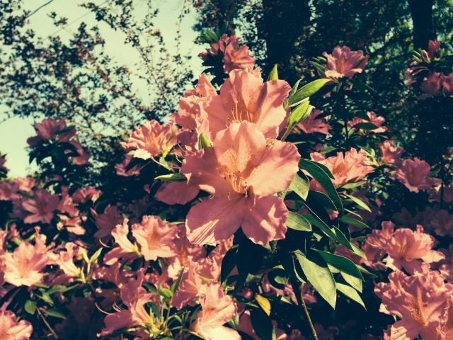 Flowers are in full bloom in Lafayette, La.